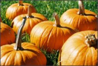 Thanksgiving Image - Pumpkins