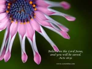 Christian Wallpaper - Pink Flower and Scripture