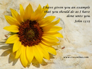 Christian Wallpaper - Flower and Scripture