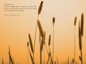 Wallpaper from Christian Counseling & Educational Services